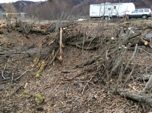 Clearing The Ravine