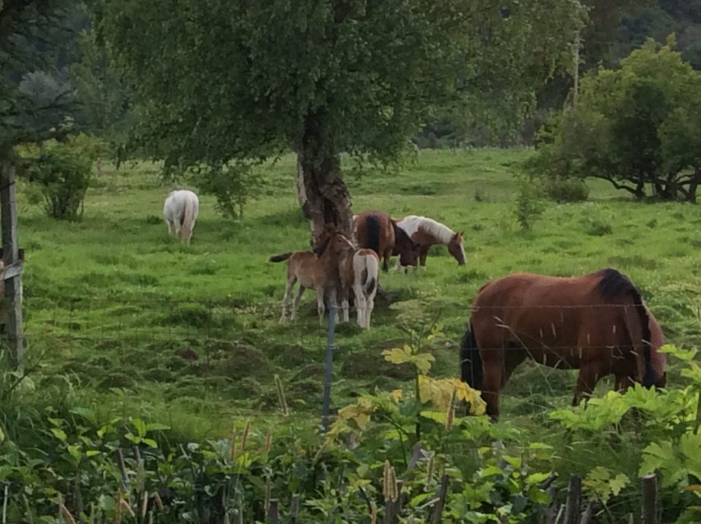 The neighbors have foals