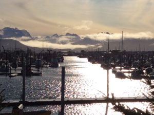 Homer Harbor this morning ice free!
