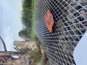 Alder Flame Grilled Salmon