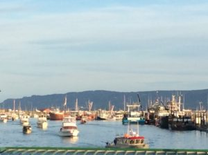 Homer Harbor is full of action!